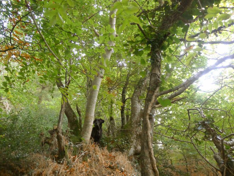 Nattadon Woods 3