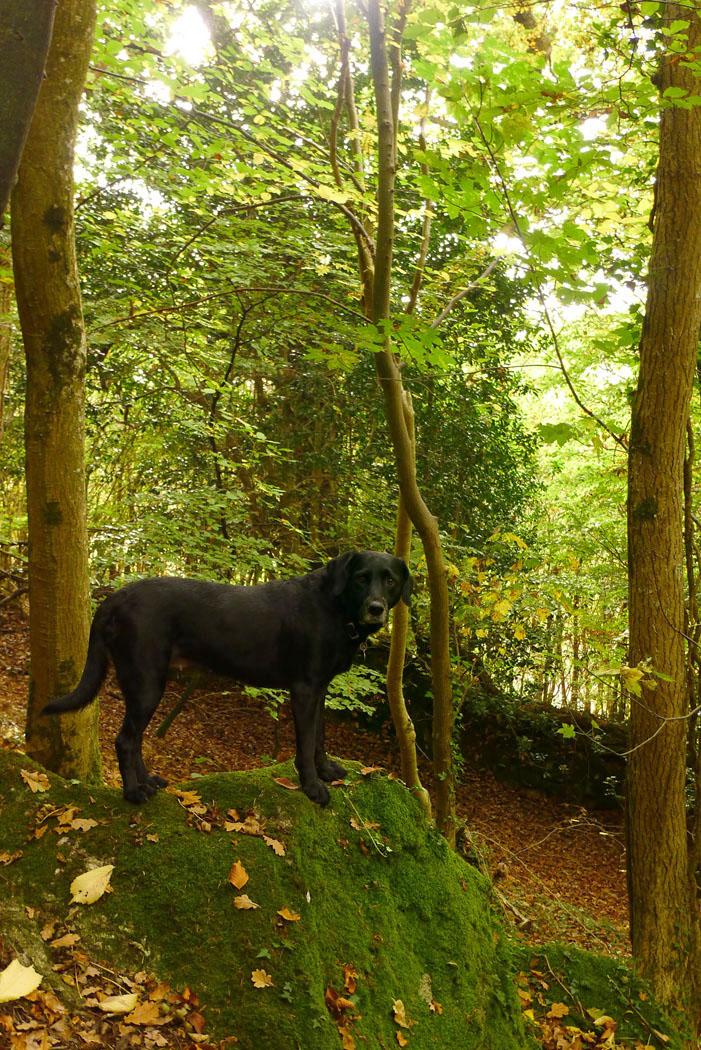 Nattadon Woods 8