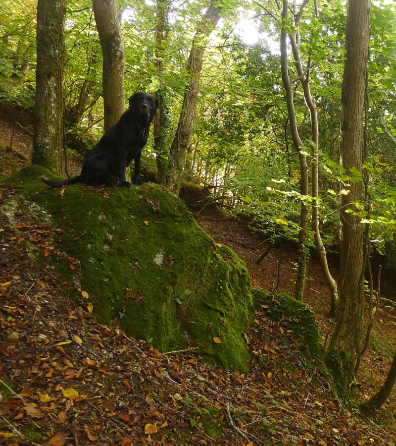 Woodland Companion