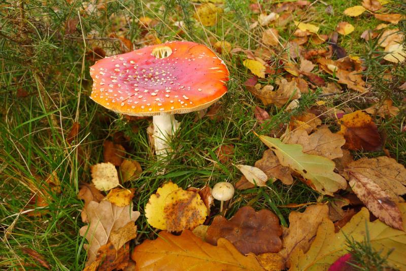 Autumn color 6
