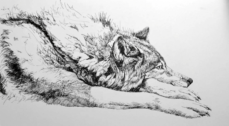 Wolf Thoughts by Jackie Morris