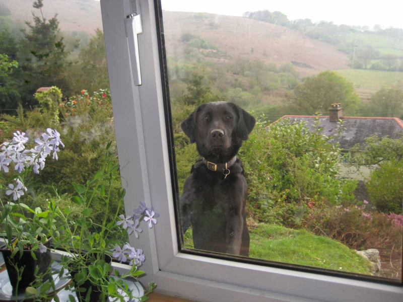 Hound at the window