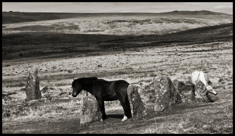 ''A Brown Pony Rubbing His Ass Against An Ancient Stone  A White Pony Scratching Her Neck Against Another  Scorhill Stone Circle  Dartmoor'' by Stu jenks