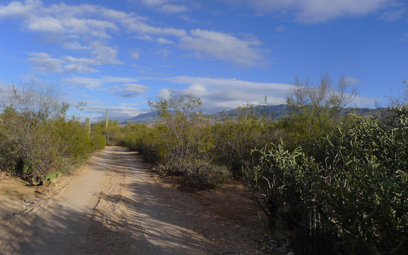 The road to my old home in the desert