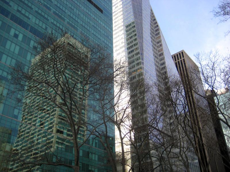 Trees of New York