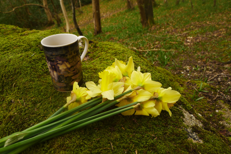 Coffee and daffodils in the woods