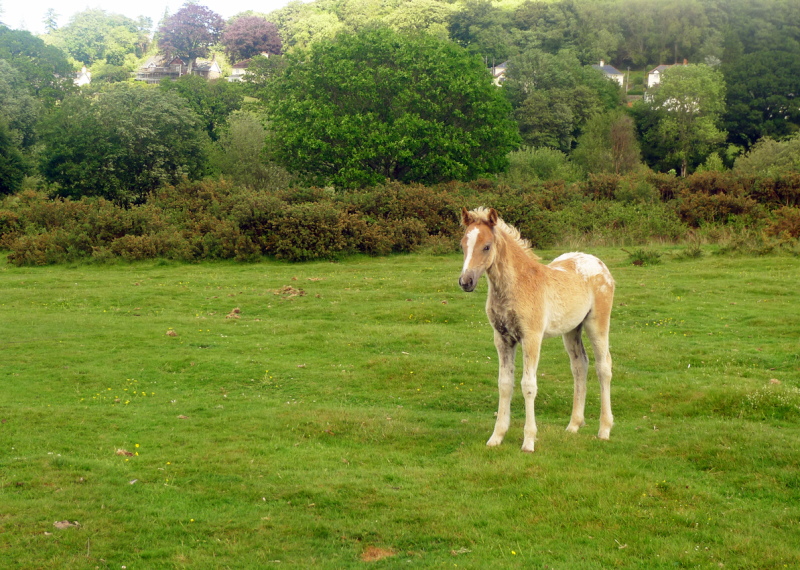 One of several foals born to the herd this spring