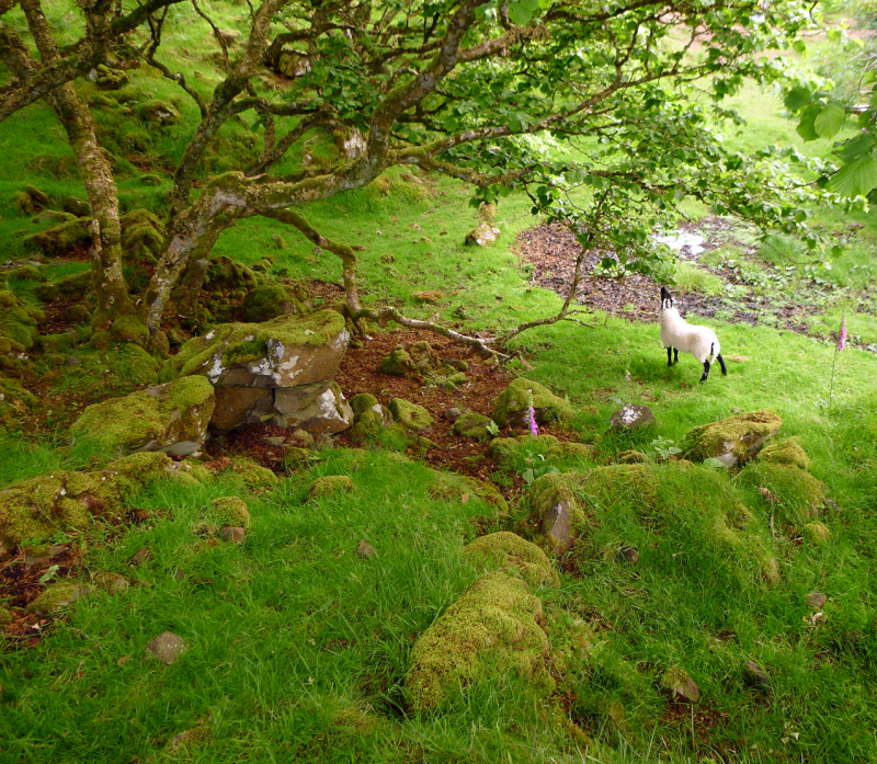 The Fairy Glen 5