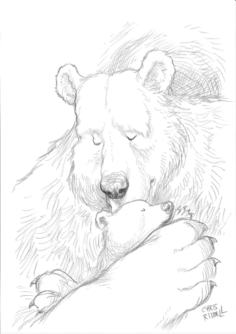 Drawing by Chris Riddell