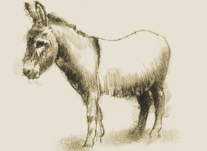 Donkey sketch by Sean Briggs