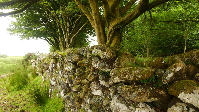 Stone wall, between Scorhill & Kestor