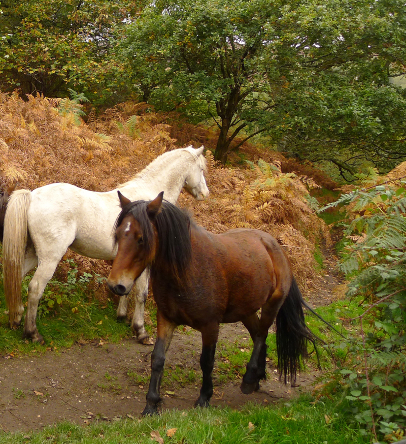 Ponies on the path 7