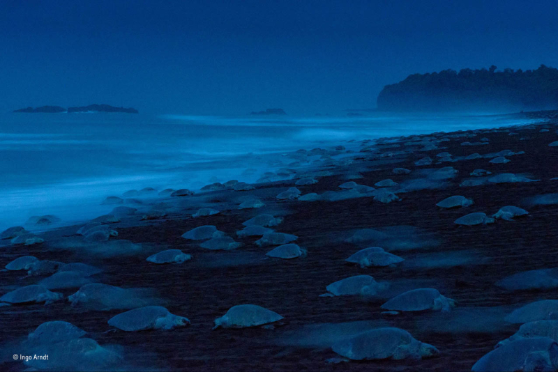 Night of the Turtles by Ingo Arndt