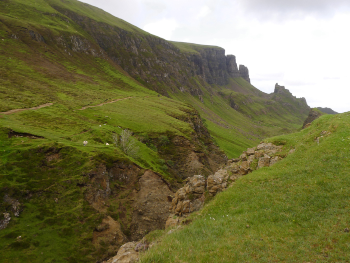 Quiraing sheep