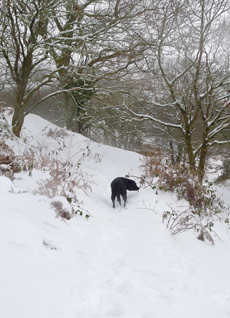 Hound in snow