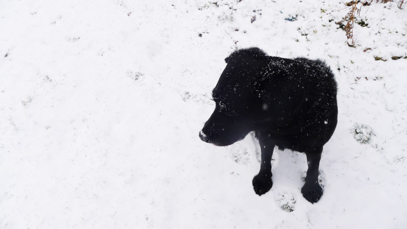Hound in snow