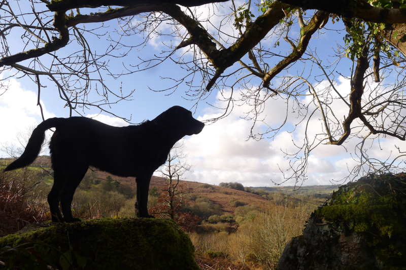 The snowless hound