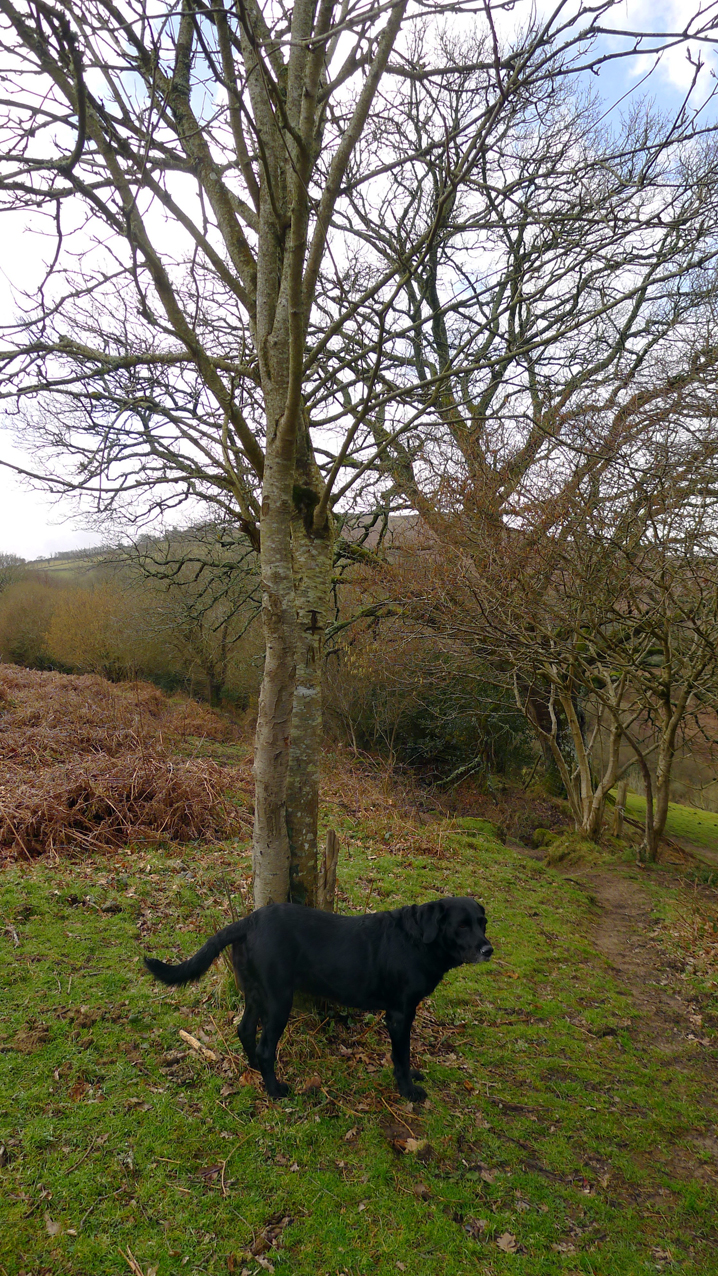 Tilly and the rowan tree