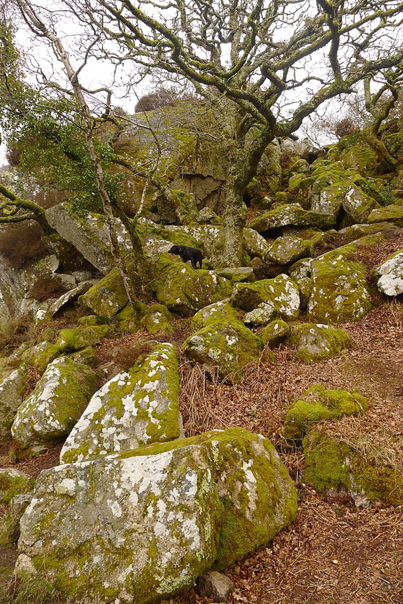 Plympbridge Woods 1