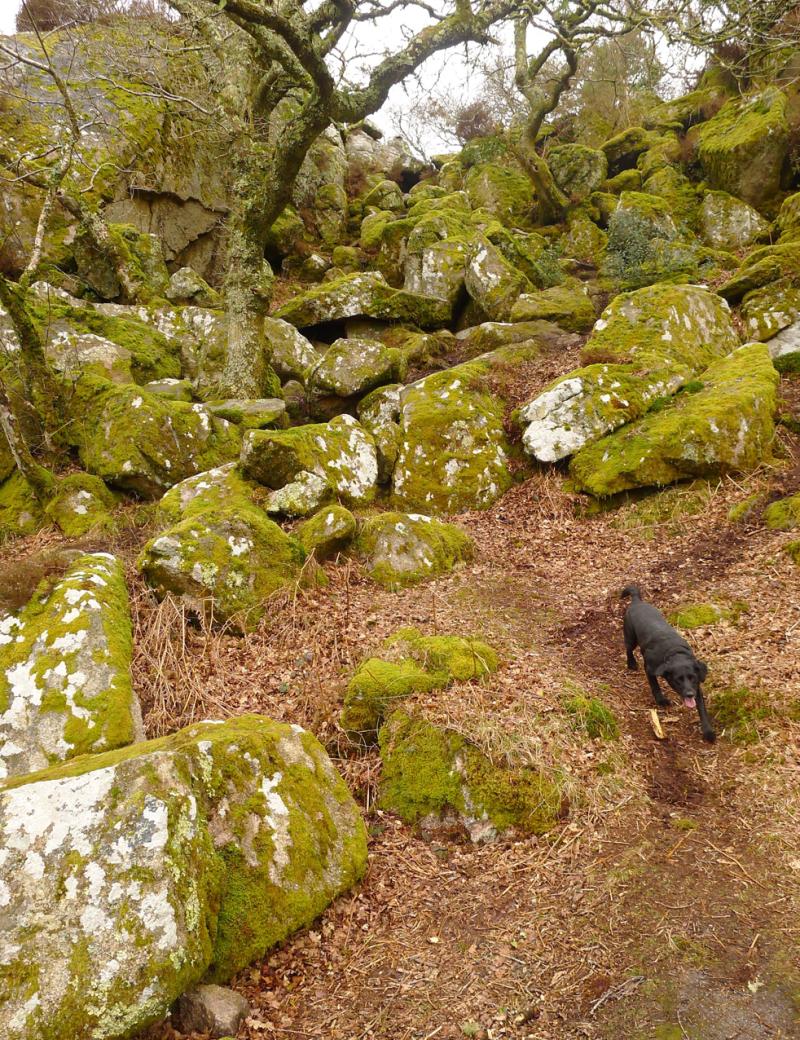 Plymbridge Woods 2