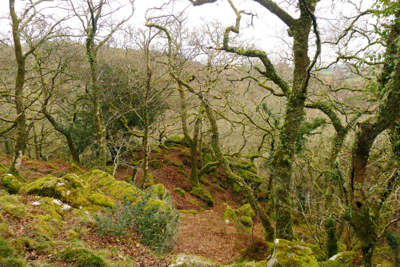 Plymbridge Woods 4