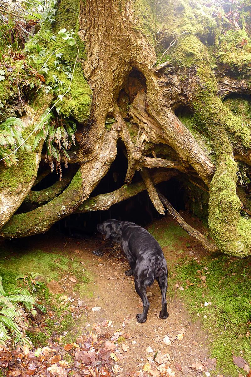 Plymbridge Woods 3