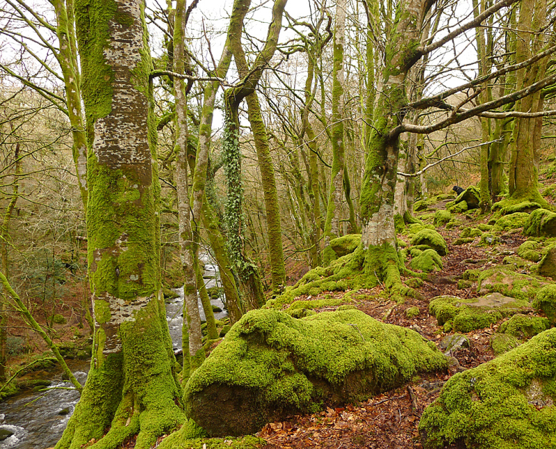 Plymbridge Woods 7