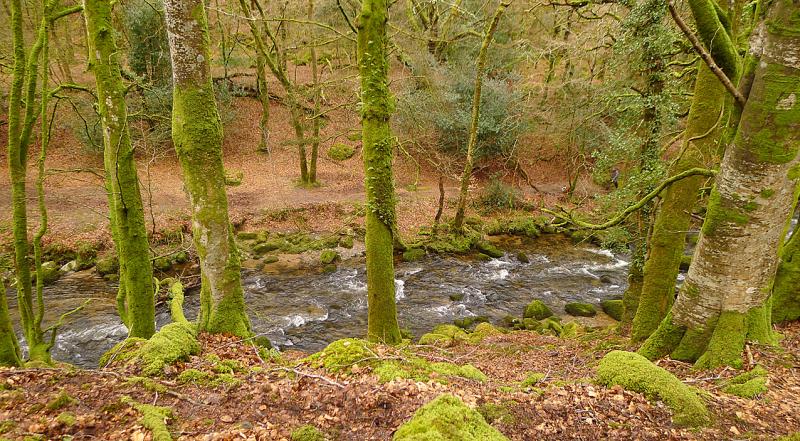 Plymbridge Woods 9