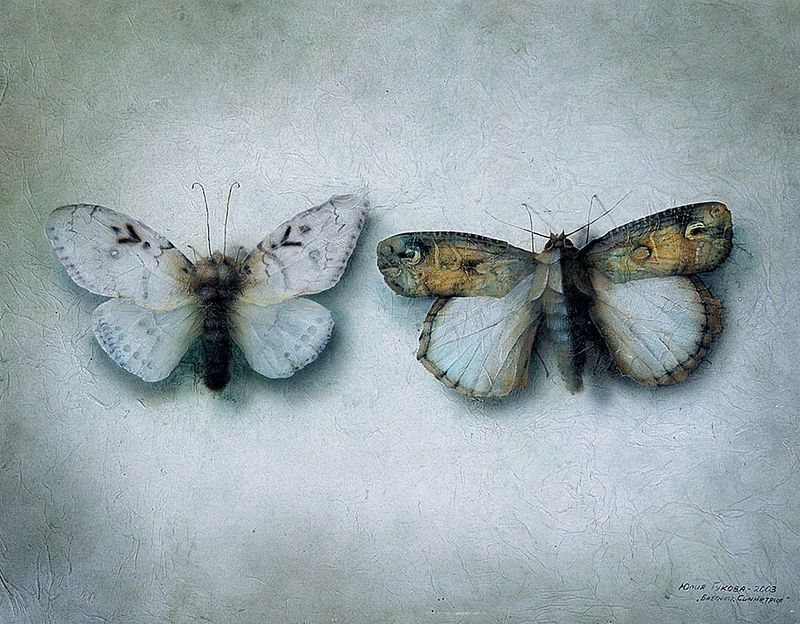 Insectia: Symmetry by Julia Gukova