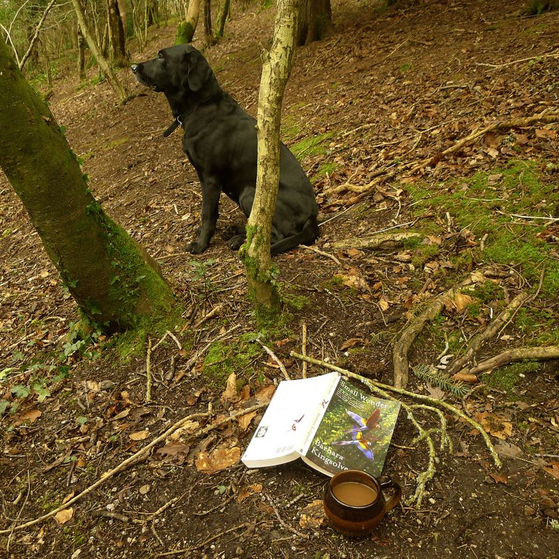 Reading in the woods 2