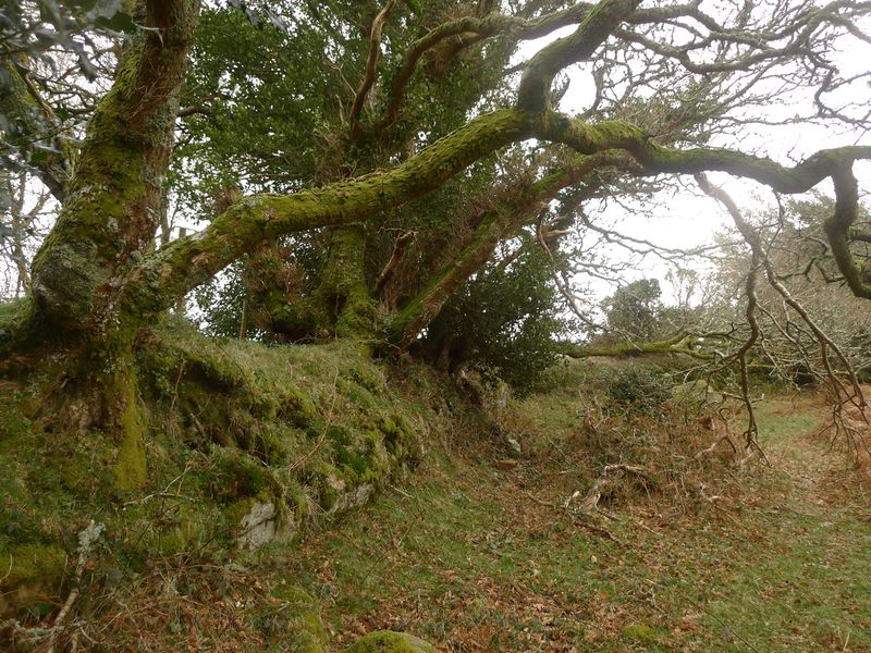 We'll follow an overgrown stone wall