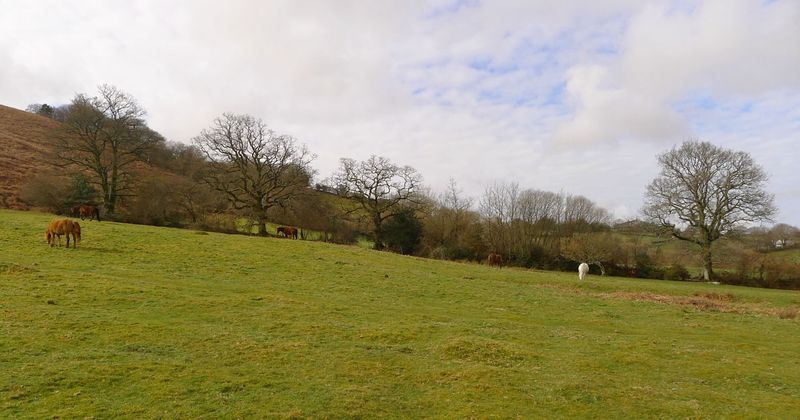 Ponies grazing below Meldon Hill