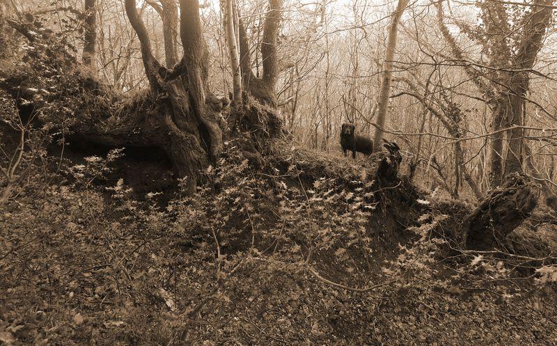 Woodland boundary 2