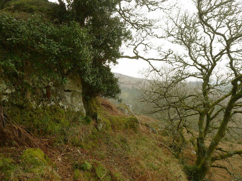 Hillside 5