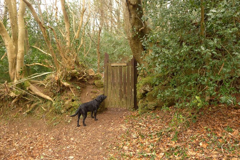 Woodland 2