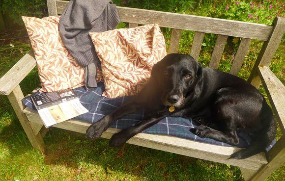 Sunny bench 4