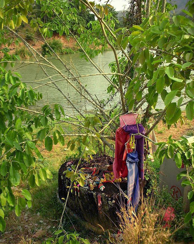 A hopea odorata tree wih offerings to a Nany Ta-khian (a female tree spirit) in Thailand