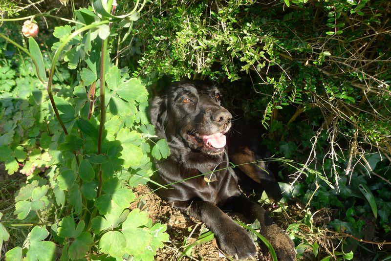 Tilly's nest 1