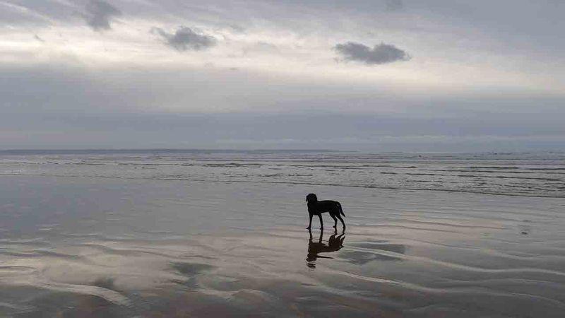 Stillness, north Devon