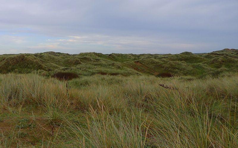 Dune grass, north Devon