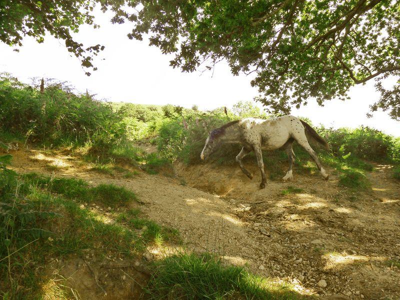 A pony encounter