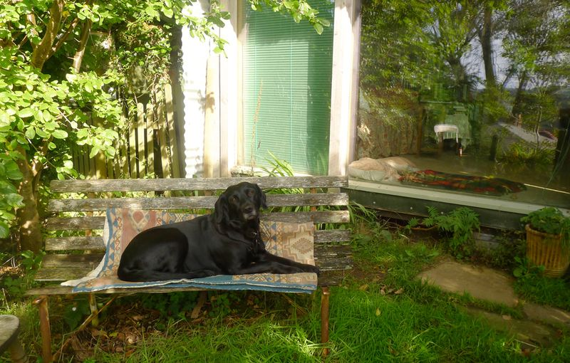 The bench under the plum tree