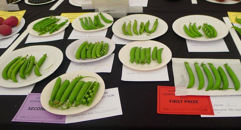 Prize-winning peas