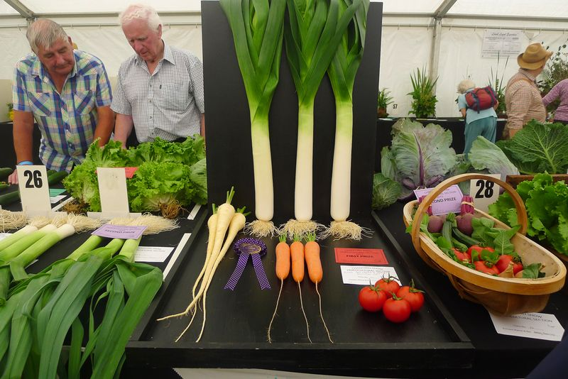 Prize-winning vegetables