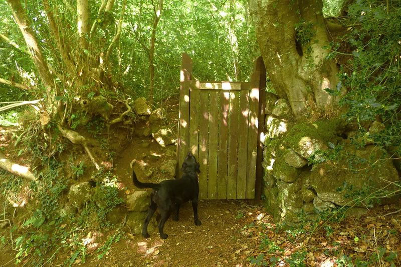The gate to the woods.