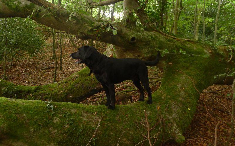 Dark Wood 8