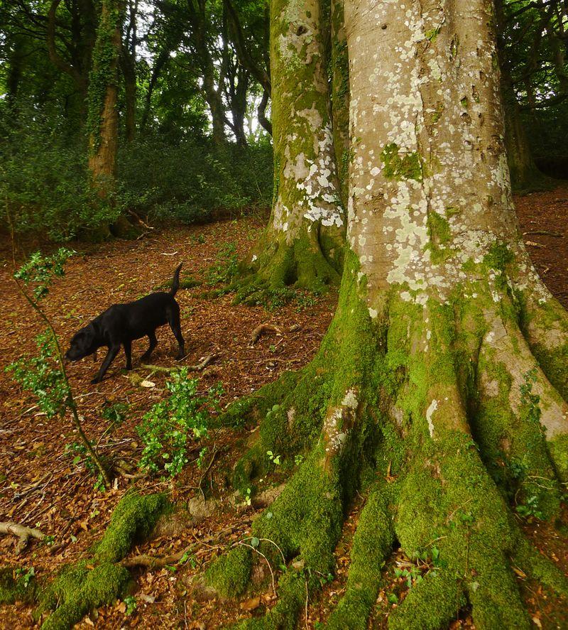 Dark Wood 12