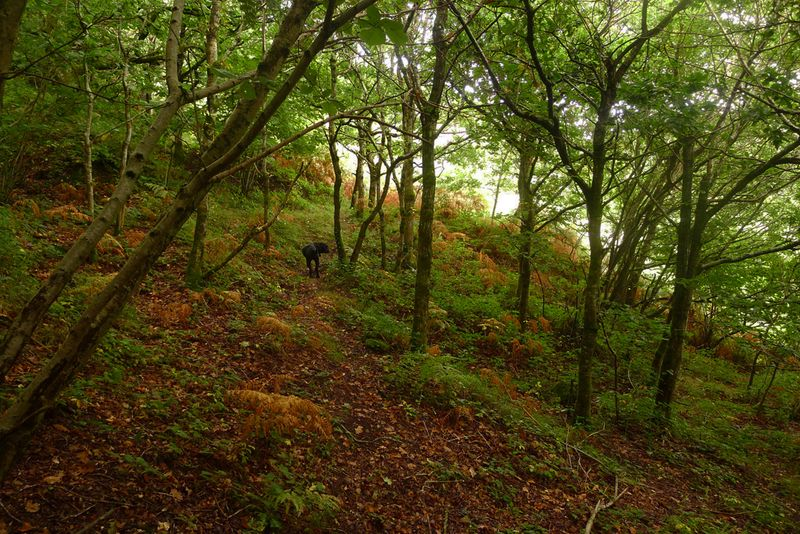 On the Border Betwixt Wood & Hill