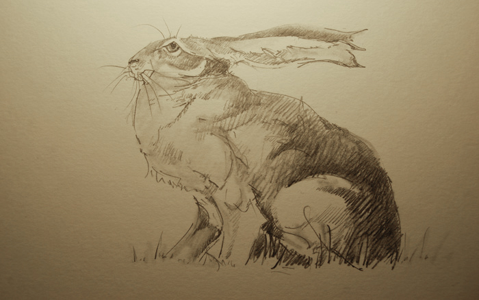 Hare drawing by Jackie Morris