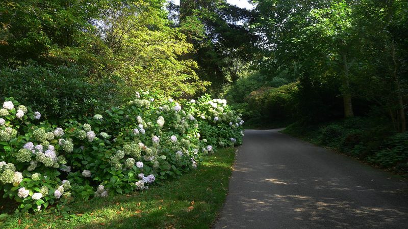 Leaving Greenway